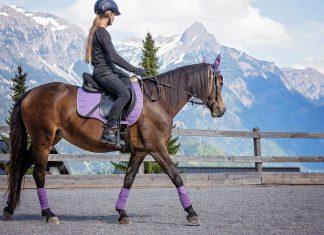 En quelques clics, achetez un tapis de selle qui prendra soin de votre cheval