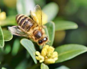 tout savoir sur les abeilles