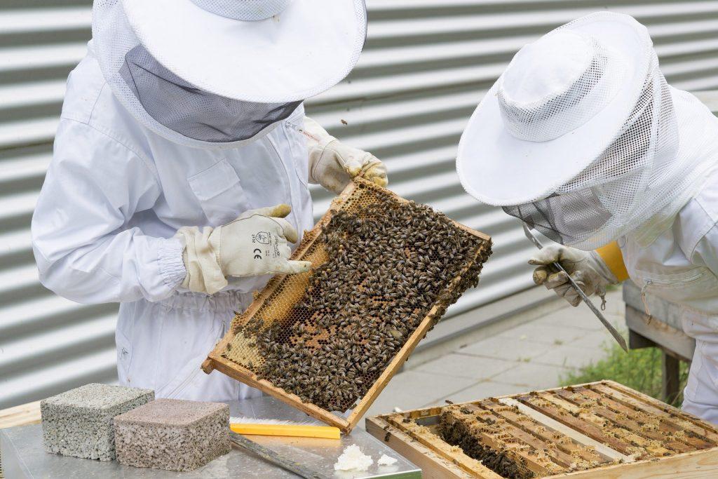les ruches à cadres rendent très facile l'inspection des rayons et la surveillance sanitaire des colonies