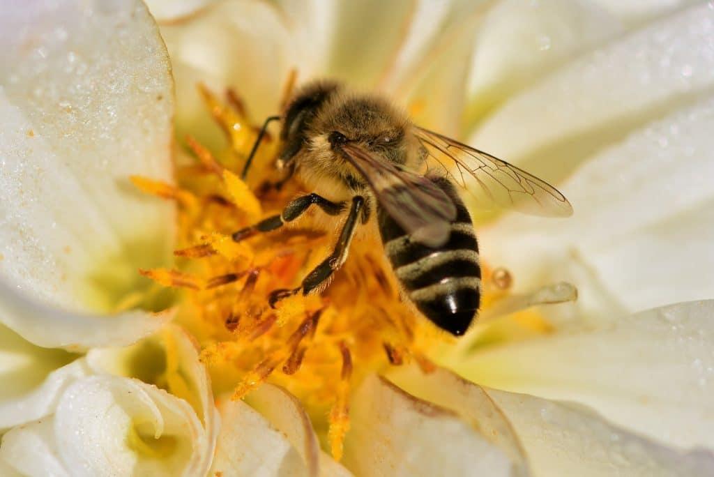 les abeilles trouvent tous leurs aliments dans les fleurs